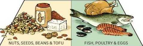 healthy eating pyramid tofu Nuts and fish